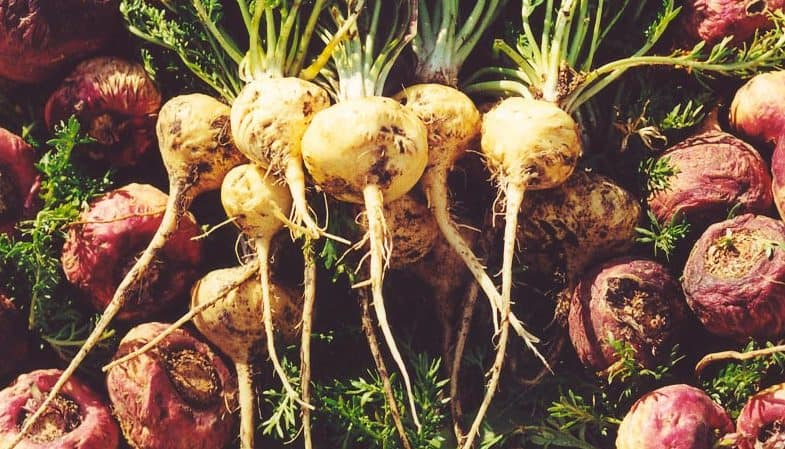 Maca Root Side Effects Uses And Benefits