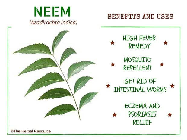 Neem benefits and uses as a medicinal herb