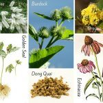 Herbs for Acne – Infographic