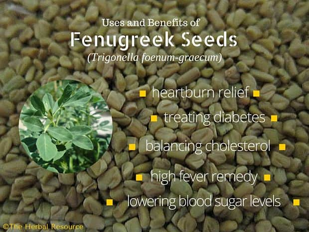 Fenugreek Seeds - Side Effects, Uses and Benefits