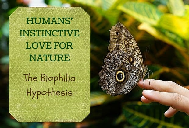 Image result for biophilia hypothesis