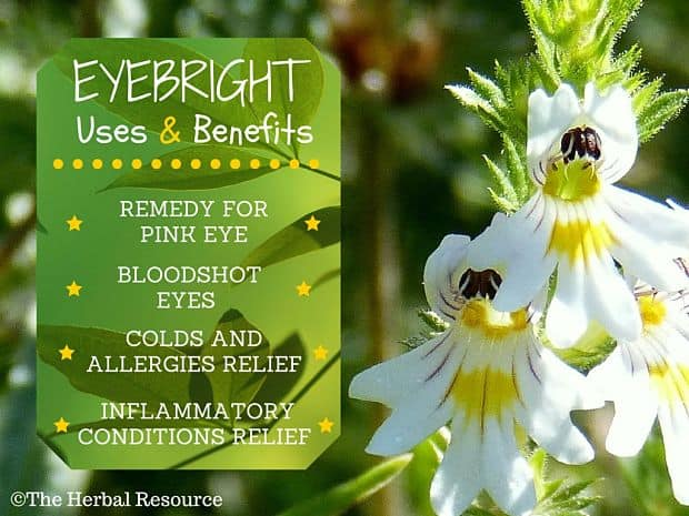 eyebright benefits