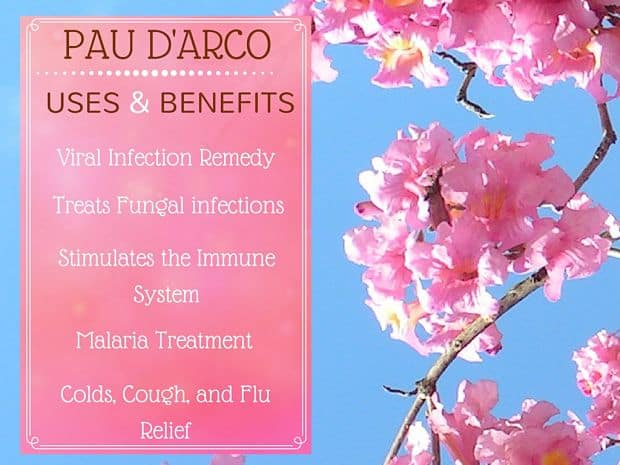 pau d'arco benefits