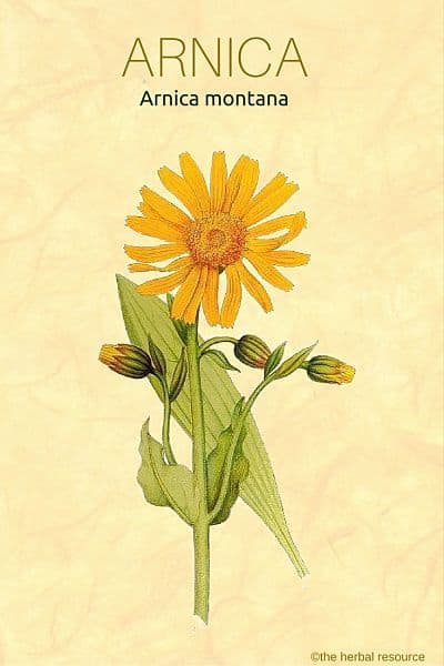 arnica montana - side effects and health benefits, Skeleton