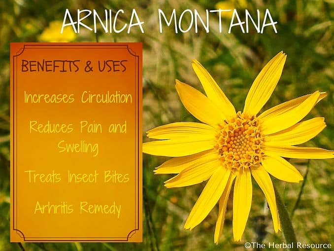 arnica montana benefits and uses