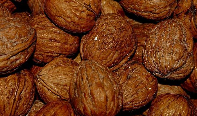 Black Walnut Uses in Herbal Medicine