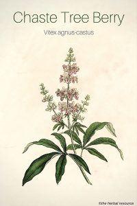 Chaste Tree Berry (Vitex agnus-castus)