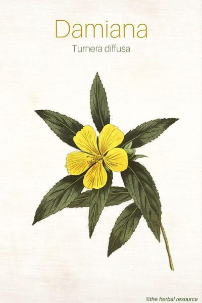 The Medicinal Herb Damiana (Turnera diffusa)