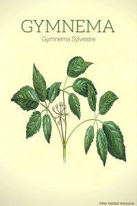 Gymnema Sylvestre - Illustration