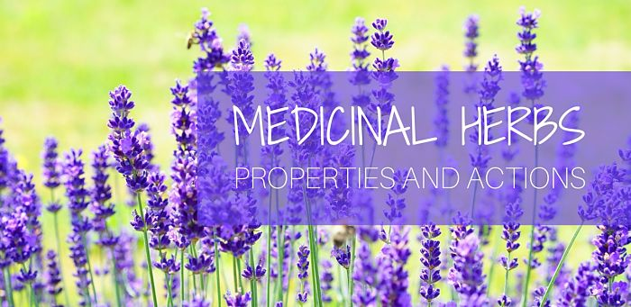 herbs properties and actions