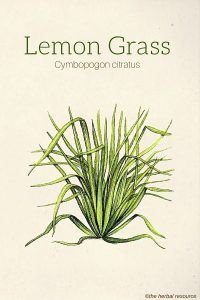 Lemon Grass Herb Uses, Side Effects and Benefits