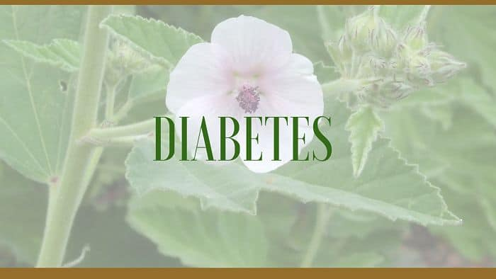 Herbs For Diabetes Treatment And Relief Uses And Benefits