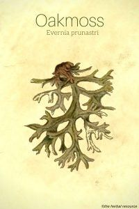 Oakmoss - Evernia prunastri