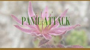 Herbs for Panic Attacks