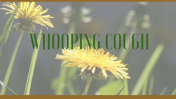 whooping cough herbs