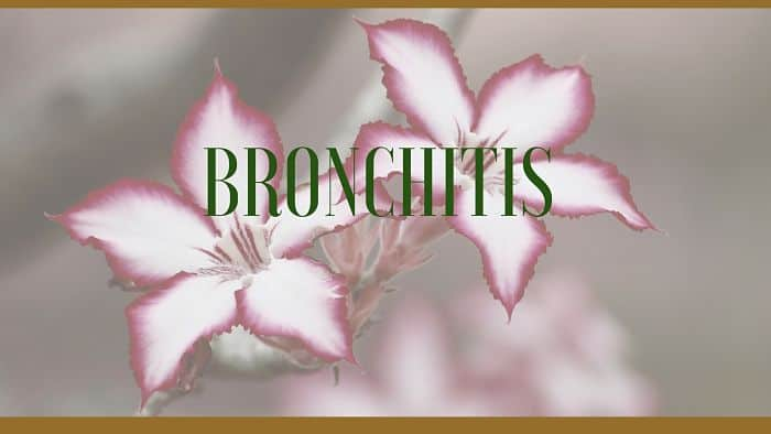 bronchitis herbal remedies