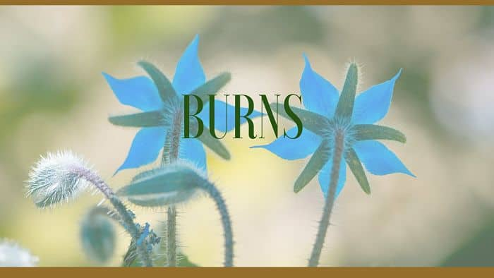 burns herbal remedies