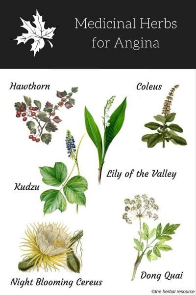 herbs for angina