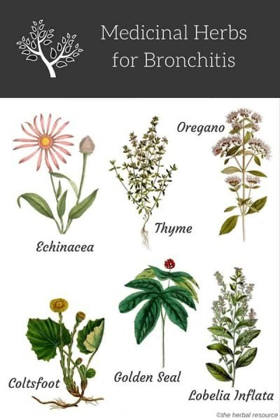 There are numerous medicinal herbs for bronchitis that can be used as a treatment and relief.  The main goal of these herbs is to restore the movement to the cilia (the tiny hairs that operate as filters in the bronchial tubes) and reduce the inflammation and swelling in the bronchial tubes.  It is vital to consult a physician, herbalist, naturopathic physician, or other healthcare practitioners before starting using medicinal herbs for bronchitis.