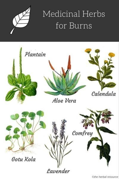 There are a number of herbs and herbal treatments that can help reduce the discomfort and aid skin repair for first degree burns as well as some second-degree burns.  The herbs that are helpful as a natural treatment for burns are primarily used topically, either as a compress or an herbal wash.  Self-care with herbs is most appropriate for first-degree burns, and for some small second degree burns.