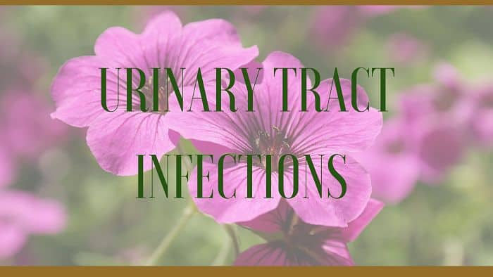 urinary tract infections herbal remedy