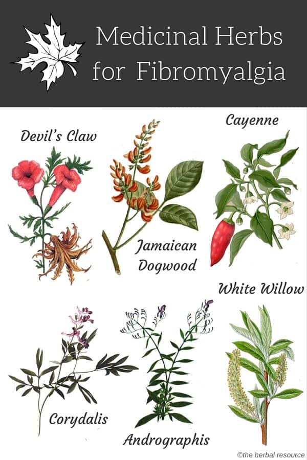 herbs for fibromyalgia