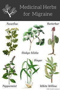 herbs for migraine