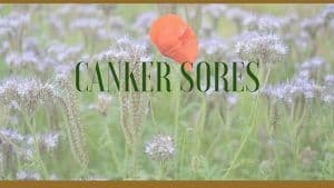 canker sores herbal remedies