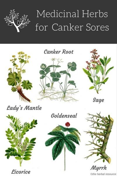 There are several herbs which are useful in the treatment of canker sores.  Many of the herbs used contain tannin (the common name for tannic acid) and other wound-healing properties.  Tannic acid is antiseptic with a broad-spectrum antibacterial and anti-viral action which gives foods an astringent taste. It is helpful for treating inflammations of the mouth, gums, and throat.  Other herbal remedies support the immune system or are helpful in relieving the pain associated with canker sores.