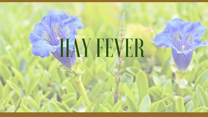 hay fever herbal remedies
