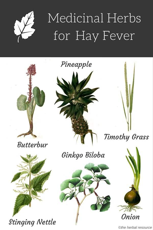 herbs for hay fever