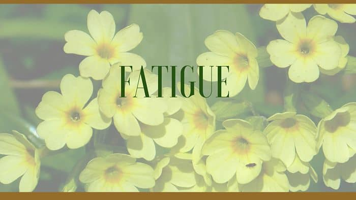 fatigue herbal remedies