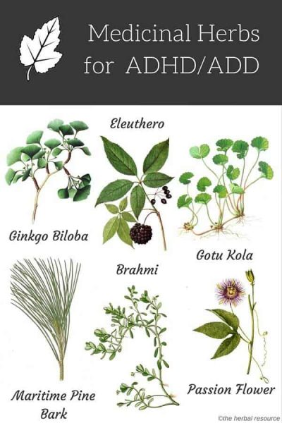 herbs for adhd add