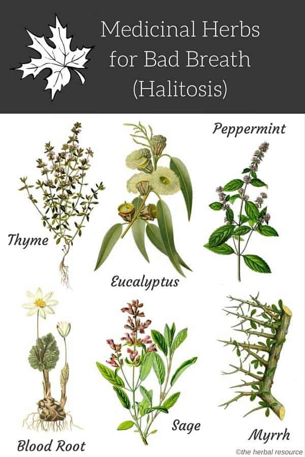 bad breath herbs