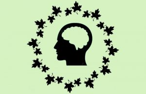 5 Best Herbal Nootropics for Cognitive Function