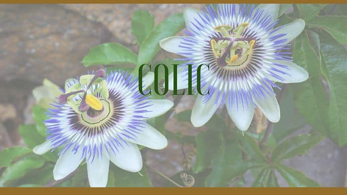 colic herbal remedies