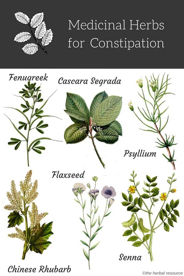 constipation herbs