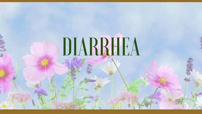 diarrhea herbal remedies
