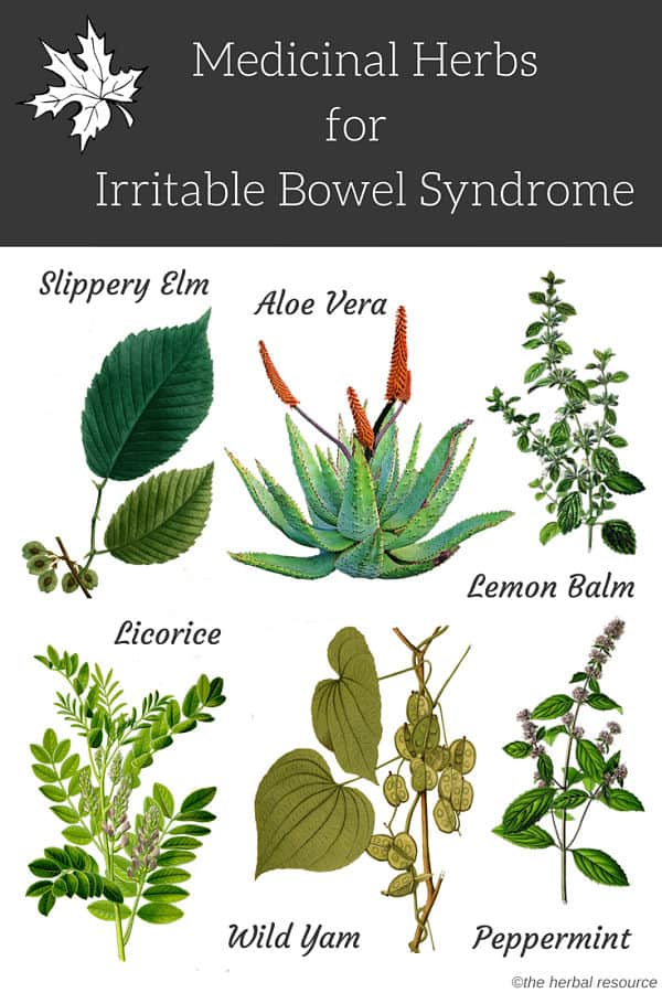 irritable bowel syndrome herbs