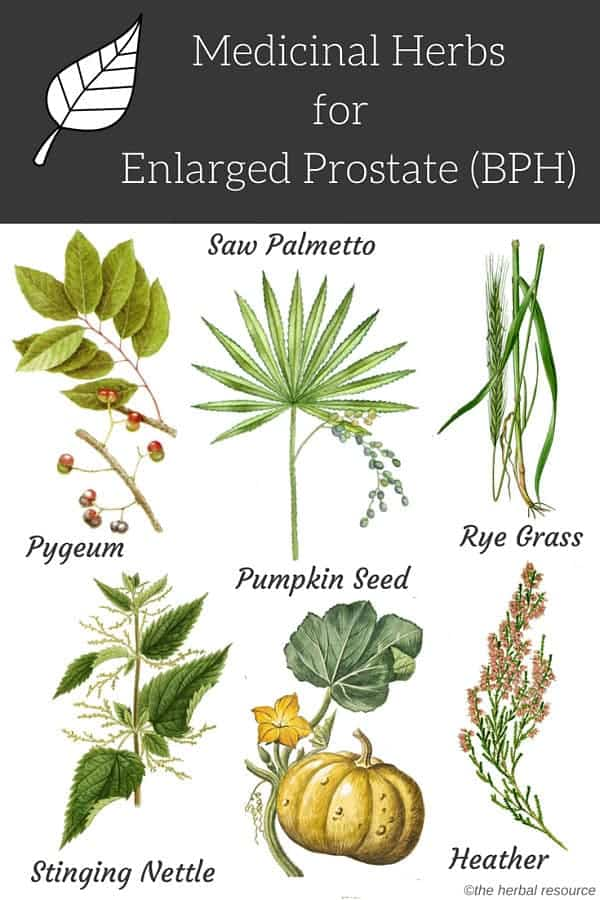 Enlarged Prostate Herbs