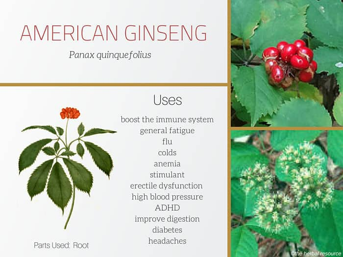 American ginseng benefits