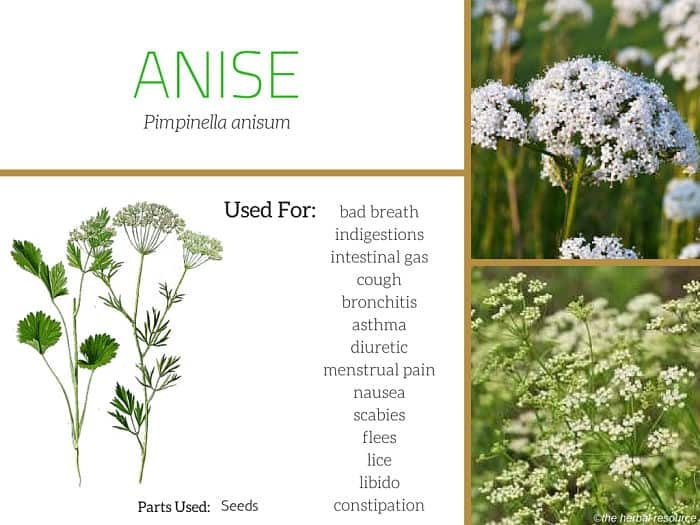 anise seed uses