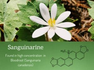 Sanguinarine Toxicity, Uses, and Benefits