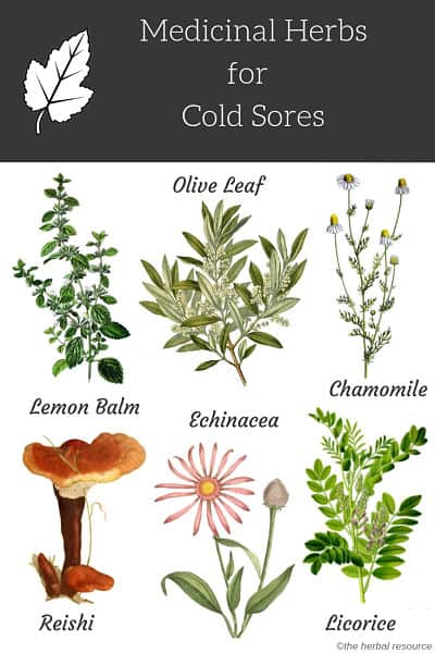herbs for cold sores