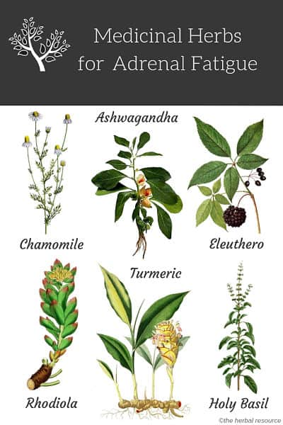 adrenal fatigue herbs ©The Herbal Resource
