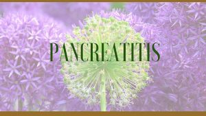 Pancreatitis Herbal Remedies