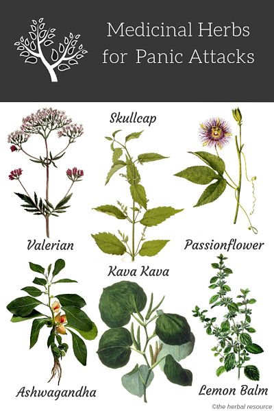 Herbs for Panic Attacks, Panic Disorder and Anxiety Treatment